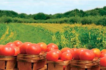 如何申请农产品商标注册?农产品注册需要哪些材料?